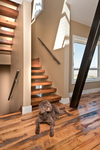 Modern Mountain Architecture, Winter Park, Colorado | Stairway w/ Dog